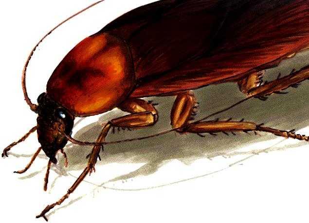 ...затрагивали тему метаморфозы человека в насекомое( в таракана, жука).